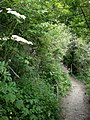 A secluded path, leading to .......^ - geograph.org.uk - 1358837.jpg
