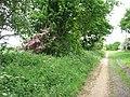 A splash of pink in hedge - geograph.org.uk - 1317535.jpg
