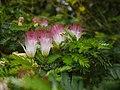 Aburi garden 7.jpg