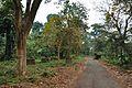 Acharya Jagadish Chandra Bose Indian Botanic Garden - Howrah 2011-02-20 1533.JPG