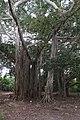 Al lado de Pasacaballo - panoramio (1).jpg