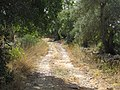 Albufeira, Country lane with dry stone wall in Enxertia (3).JPG