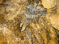 Alisardr cave by Mardetanha 2803.jpg