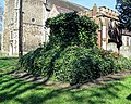 All Hallows Church Tottenham London England - churchyard chest tomb overgrown 1.jpg