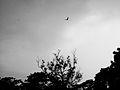 Alone bird.jpg
