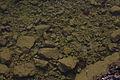 Altausseer See 78917 2014-11-15.JPG