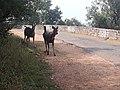 Alwar forest and wildlife sanctuary 18.jpg