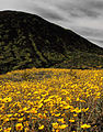 Amboy Crater (Mojave Desert) (3104995103).jpg