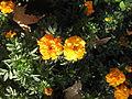Amin al-Islami Park - Trees and Flowers - Nishapur 052.JPG