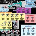 Amino acids chart PNG.png