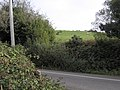 An interested cow - geograph.org.uk - 2116931.jpg