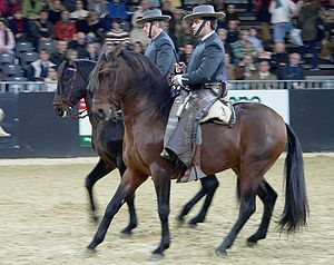 Rein-back - The reinback, clearly helping to engage the horse's hind end.