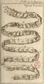 Andry - De la génération des vers (1741), planche p. 200-1.png