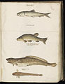 Animal drawings collected by Felix Platter, p1 - (167).jpg