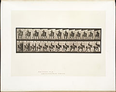 Animal locomotion. Plate 629 (Boston Public Library).jpg