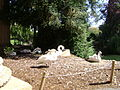 Animals at Palace of Fine Arts 1.JPG