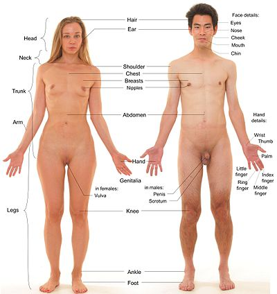 Anterior view of human female and male, with labels.jpg