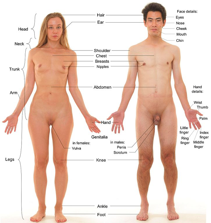 Naked men and women models