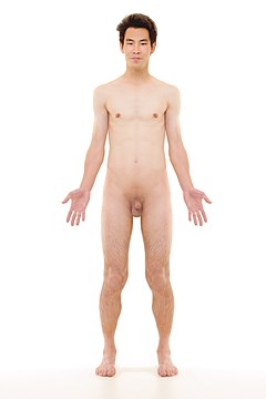 Anterior view of human male, retouched.jpg