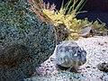 Aquarium of Cattolica - Unidentified fish (2).jpg