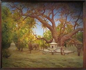 Arbre du Bouddha Sakyamuni à Kandy