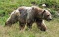 Arosa - bear.jpg