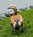 Arosa - bird.jpg