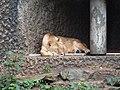 Artis Zoo, Amsterdam (7621055512).jpg