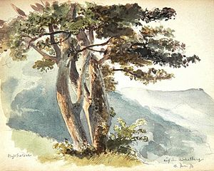 Aichelberg - A field maple on the Aichelberg, watercolor painting of  General Eduard von Kallee, 15 June 1870