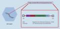 Aufbau eines Trägervirus zur Gentherapie (adenoassoziierter Virus, AAV).webp