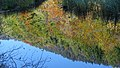 Autumn colors in Alpsee (15990661658).jpg