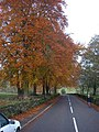 Autumn colours on trees outside Winster - geograph.org.uk - 481322.jpg