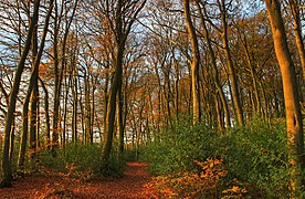 Autumn in Widow Croft (geograph 2699250).jpg