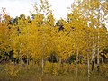 Autumn in the Bighorn Mountains.JPG