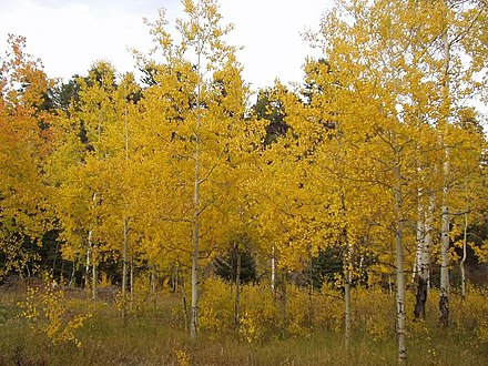 Autumn in the Bighorn Mountains Autumn in the Bighorn Mountains.JPG