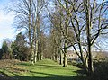 Avenue of trees - geograph.org.uk - 658160.jpg
