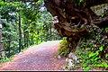 Ayubia track.jpg