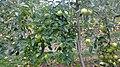 Bacchus Marsh VIC 3340, Australia - panoramio (4).jpg