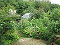 Back garden - Flickr - peganum (3).jpg