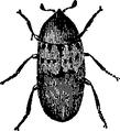 Bacon Beetle.png