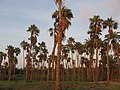 Baja California Sur (21655415048).jpg