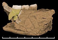 фосил БХ-1,