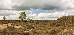 Balloërveld, natuurgebied in Drenthe 28.jpg