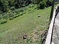 Barga, Province of Lucca, Italy - panoramio - jim walton (28).jpg