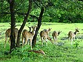 Barnawapara Wildlife Sanctuary Chhattisgarh India.jpg