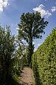 Baum auf dem Weg zum Zschonergrund Dresden.jpg
