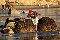 Beach Inspector (2757312617).jpg