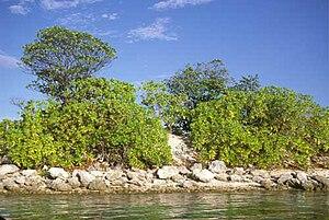 Geography of Tuvalu - Scaevola taccada and Guettarda speciosa grow near the beach on Nanumea Atoll