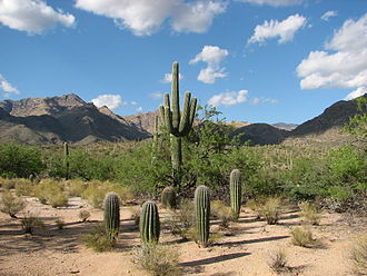 Sabino Canyon - Image: Bear Canyon Trail at Sabino Canyon