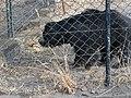 Bear DSCN2581.jpg